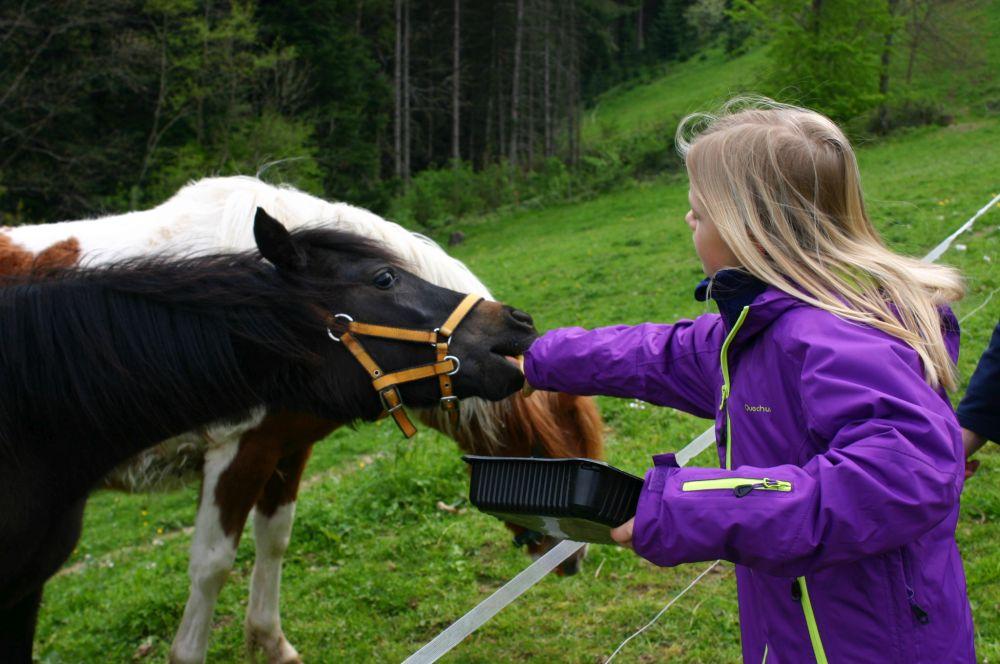 Wälderhof Pony's Ponyreiten