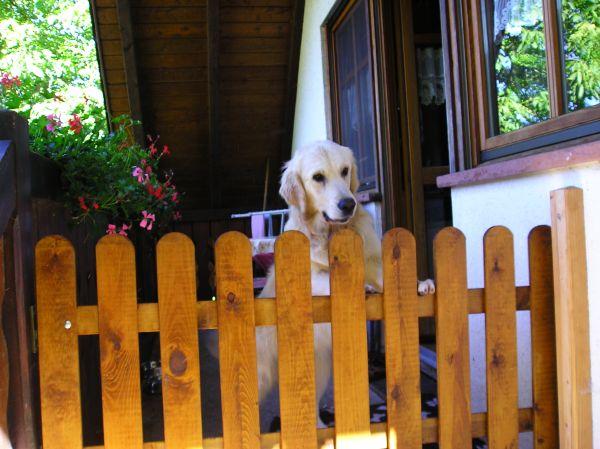 Bauernhofurlaub mit Hund auf dem Wälderhof