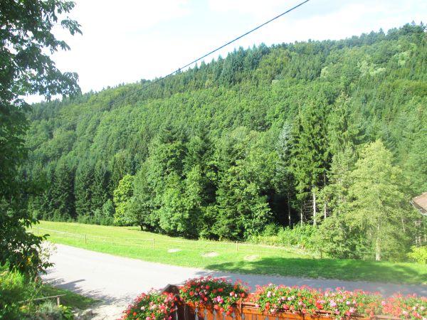 Blick aus der Ferienwohnung Terrassenblick